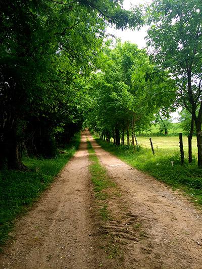 Dirt-Road-to-old-Koger-farm